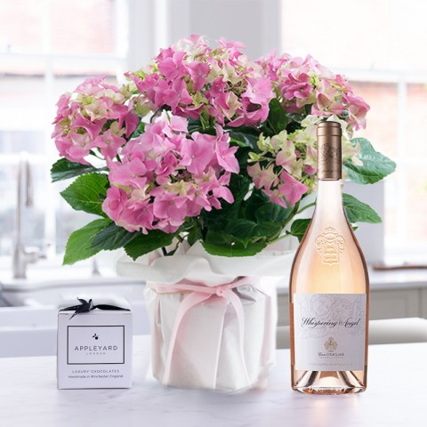 Gift Wrapped Pink Hydrangea, Whispering Angel & 6 Mixed Truffles