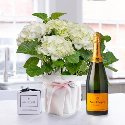 Gift Wrapped White Hydrangea, Veuve Clicquot & 6 Mixed Truffles