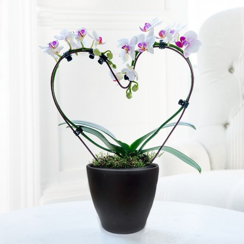 Pink Heart Shaped Orchid