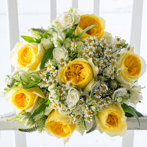 Lemon Garden Rose