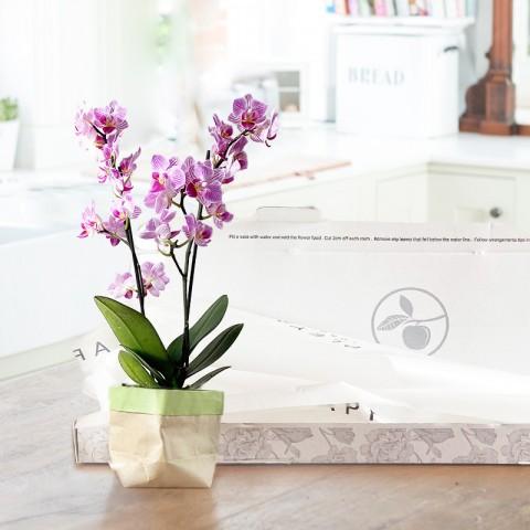 Letterbox Mini Orchid