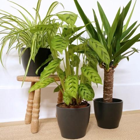 Tropical Trio Bundle