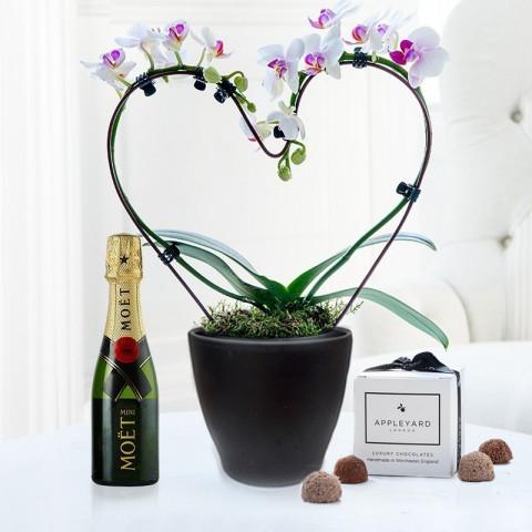 Pink Heart Shaped Orchid, Mini Moët & 6 Mixed Truffles