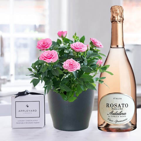 Pink Rose Plant, Prosecco Rosé & 6 Mixed Truffles