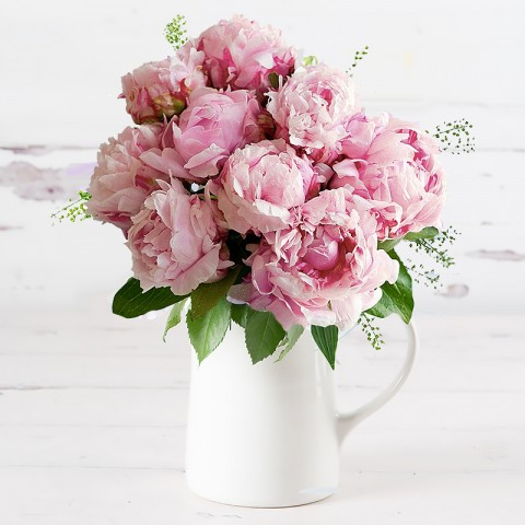 British Scented Peonies
