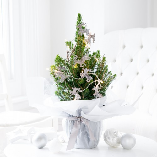 Christmas Plants | Christmas Tree Plant | Appleyard Flowers