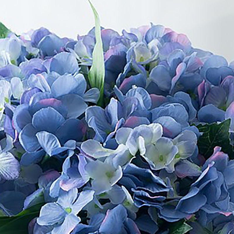 how to make my hydrangea blue