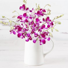 Galaxy Dendrobium Orchids