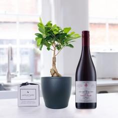 Ficus Ginseng Bonsai Plant in Pot, Les Peyrautins Pinot Noir & 6 Mixed Truffles